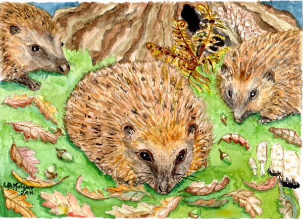 hedgehogs three